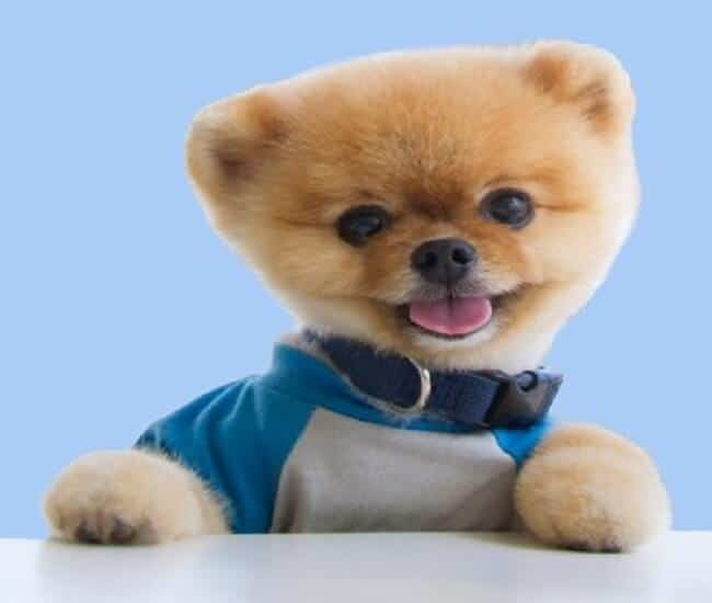 who is jiffpom real owner